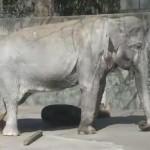 井の頭動物園で象のはな子に会おう!動物とのふれあいや営業時間