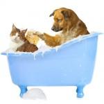ペットについたノミの駆除法と人に与える影響&ノミのジャンプ力