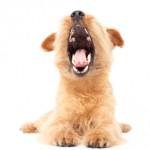 犬のイビキやあくびは病気の可能性も?うつ病になる犬もいる!?