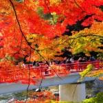香嵐渓のこれは見たい紅葉の見所&これは食べたい!グルメ情報♪