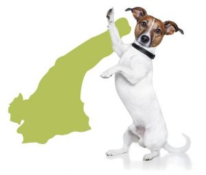 淡路島,犬と泊まれる宿泊施設